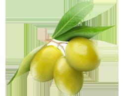 olives_png14289